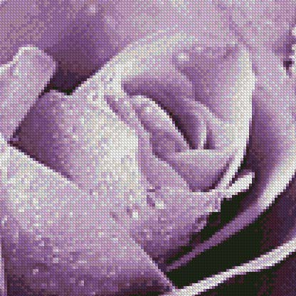 Amethyst Smoke Rose