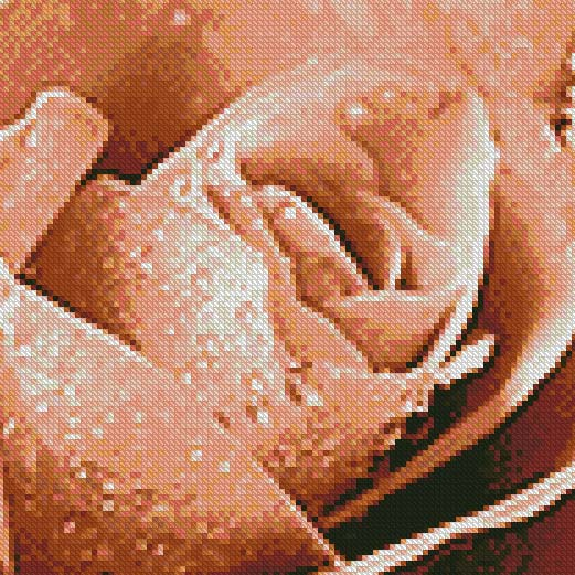 Antique Brass Rose