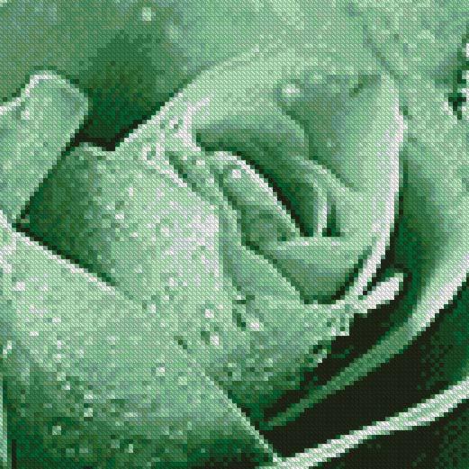 Dark Sea Green Rose