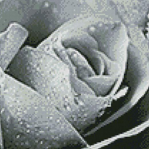 Dusty Gray Rose