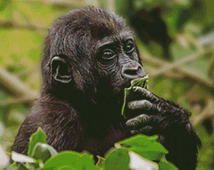Gorilla tussen bladeren patroon