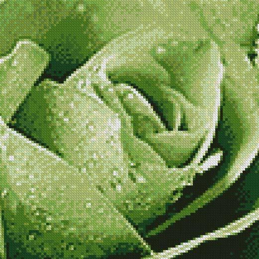 Green Smoke Rose