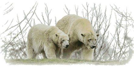 IJsberen voorbeeld