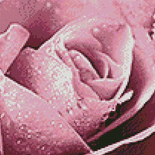 Oriental Pink Rose