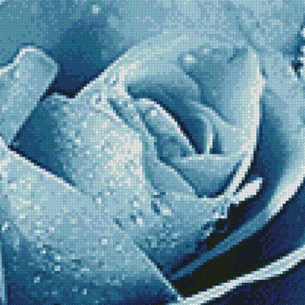 Polo Blue Rose