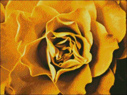 Roos Geel patroon