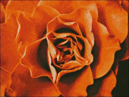 Roos Oranje patroon