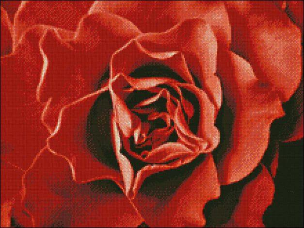 Roos Rood patroon