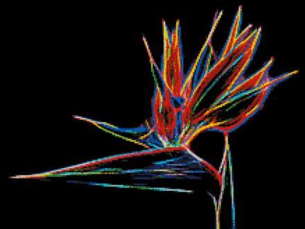 Strelitzia Neon patroon
