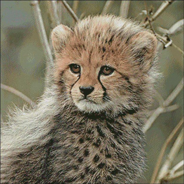 cheeta welpje patroon