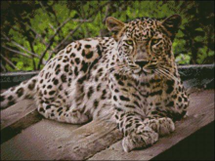 luipaard patroon