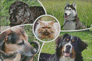 collage huisdieren layout eind